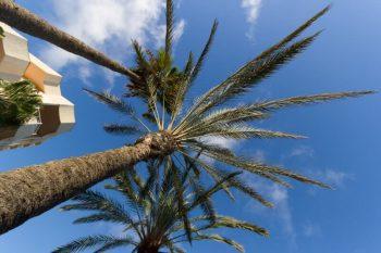 Gran Canaria Flitterwochen